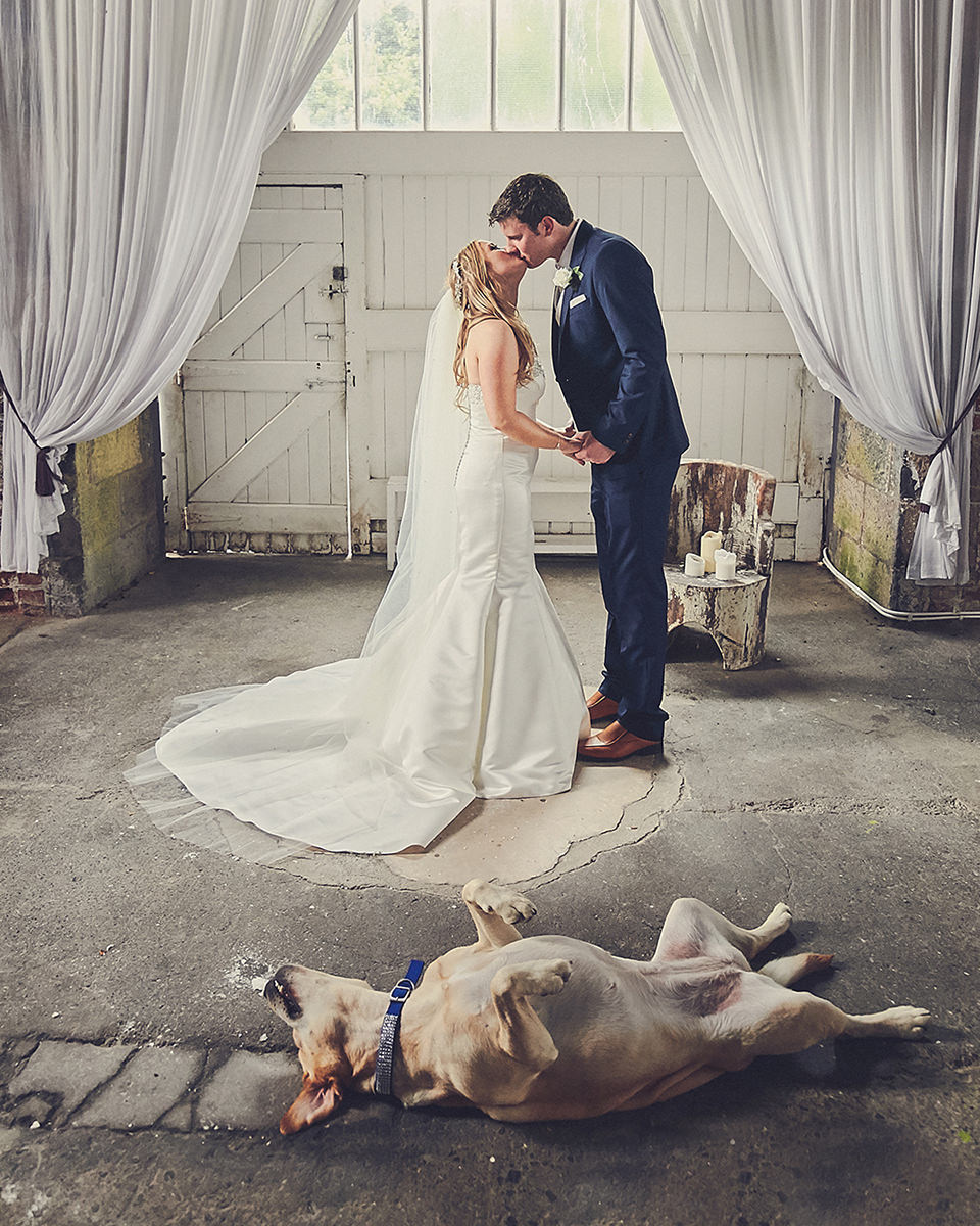 Dog on wedding day