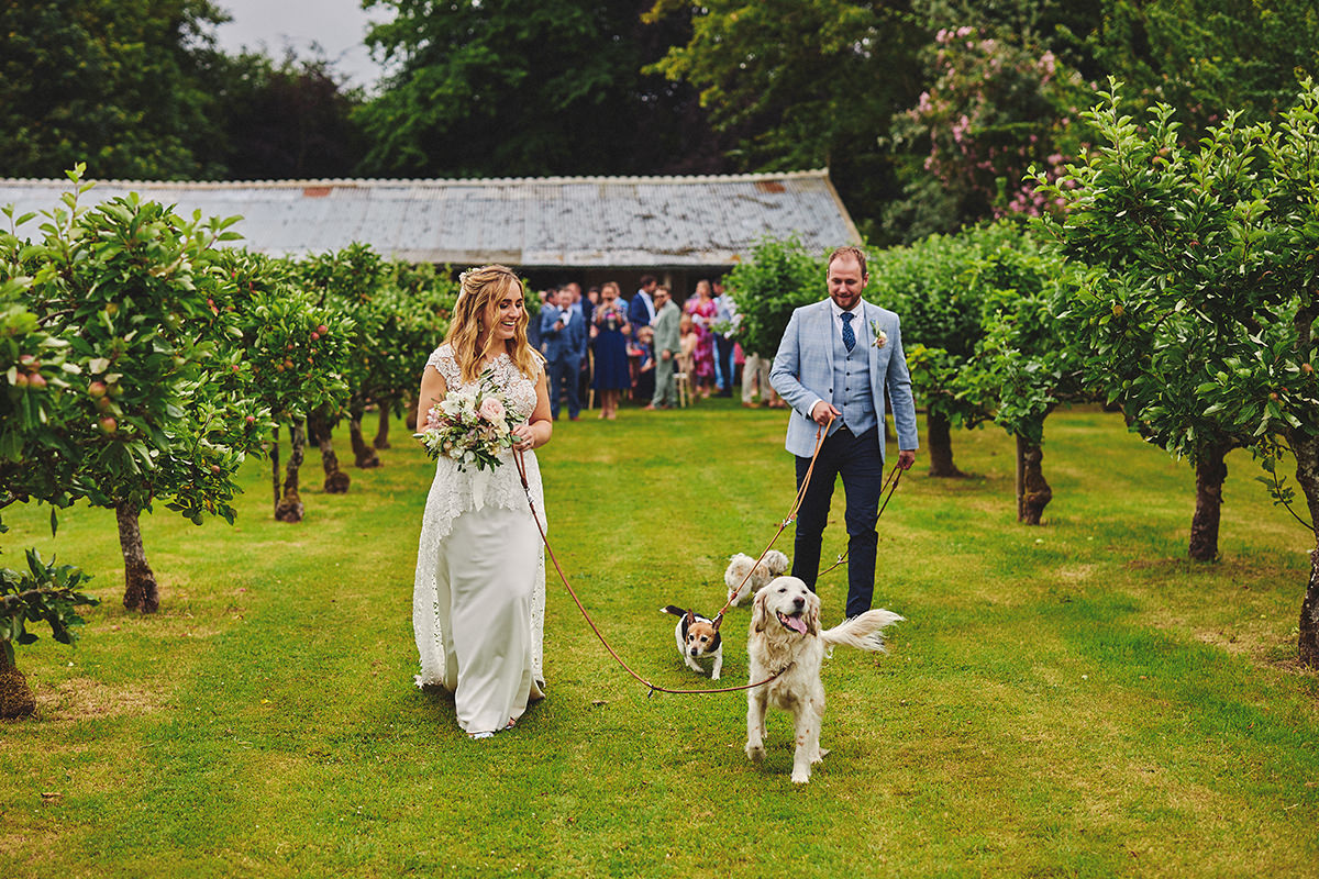 Dog Wedding day